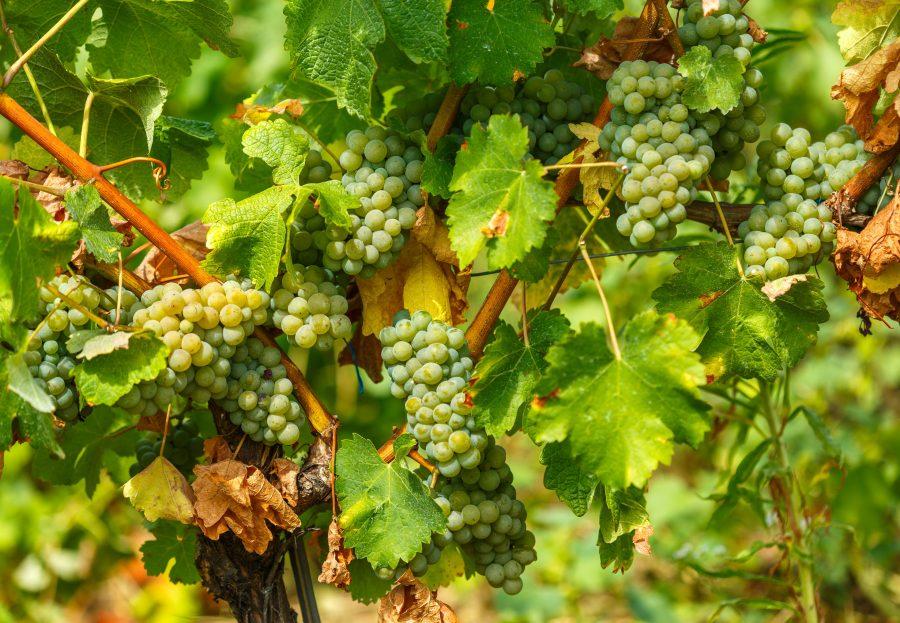 Catas de vino de los mejores vinos del mundo